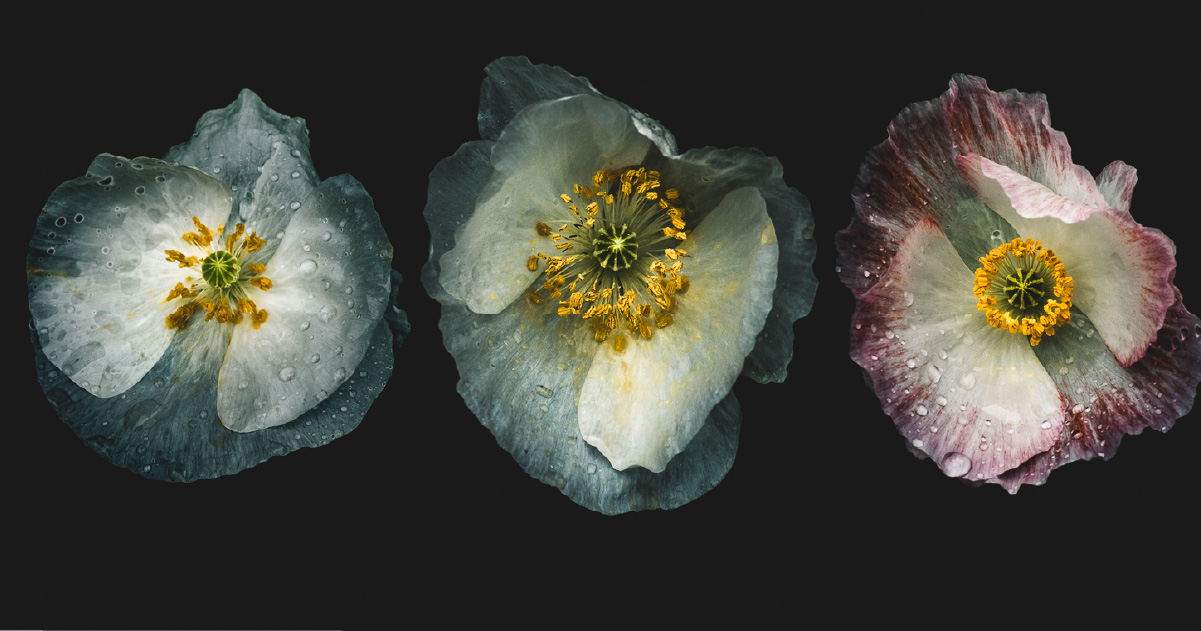 Flower Photography: Journey from the Figurative to the Abstract