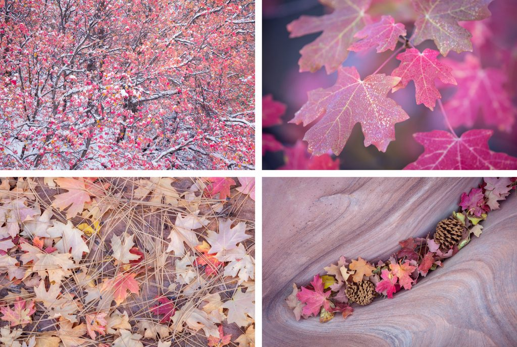 A photo collage of red maples in Zion National Park